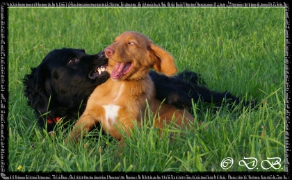 Chayenne und Finus in Action...16.08.2011